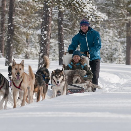 Dog Sled - Scandinavia Tours