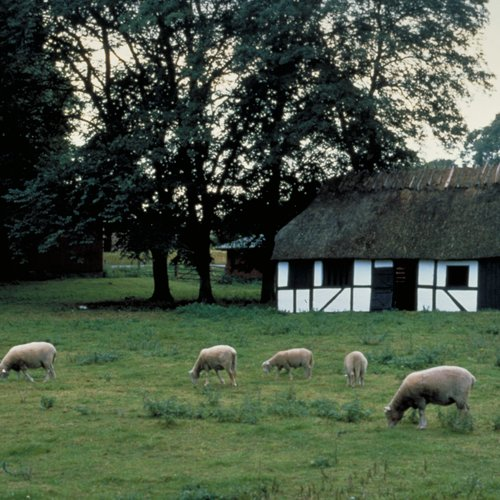 Funen - Denmark's Garden Island, with Gently Rolling Hills, Orchards and Farmhouses - Denmark tour Packages