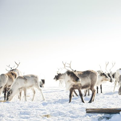 Lapland - Finland Tour Packages