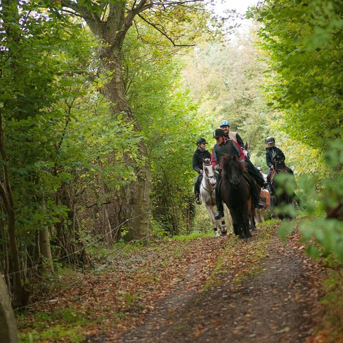 riders in forest by holsteenhus on south funen_original 1_1_105