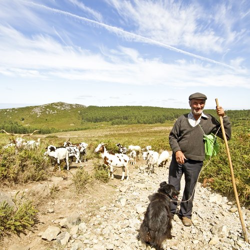 shepherd with his flock in the countryside from portugal