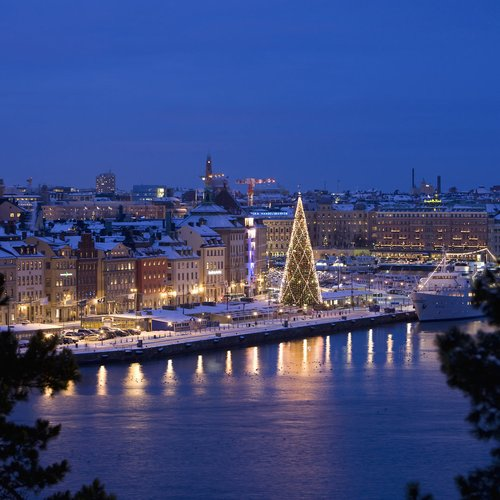 The Big Christmas Tree on Skeppsbron is the Largest Real Christmas Tree in the World - Sweden Tour Packages from India