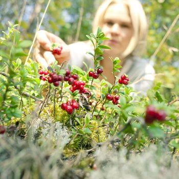 wild and delicious -berry picking
